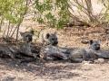 2016 - Afrique du Sud - Parc Kruger - Hyènes