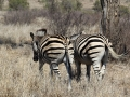 2016 - Afrique du Sud - Parc Kruger