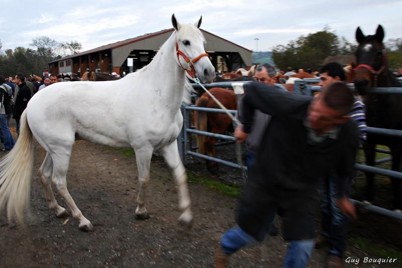 Cheval blanc - 2012 - Guy Bouquier