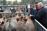 Les ânes - 2012 - Anne Bouquier