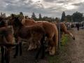 Foire aux chevaux