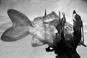 poisson-de-lumiere