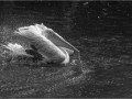 JMD_bain du pelican